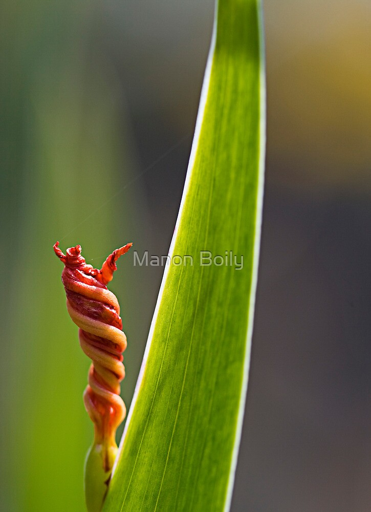 twisted flower by Manon Boily