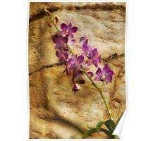 Orchid - Just Splendid Poster