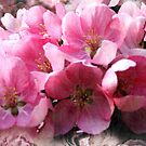 Cheery cherry blooms by Fiery-Fire