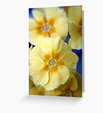 Yellow Primula Flowers Greeting Card
