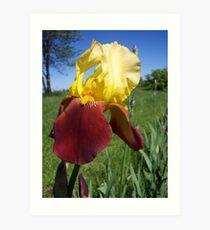 Love the Iris .... Art Print