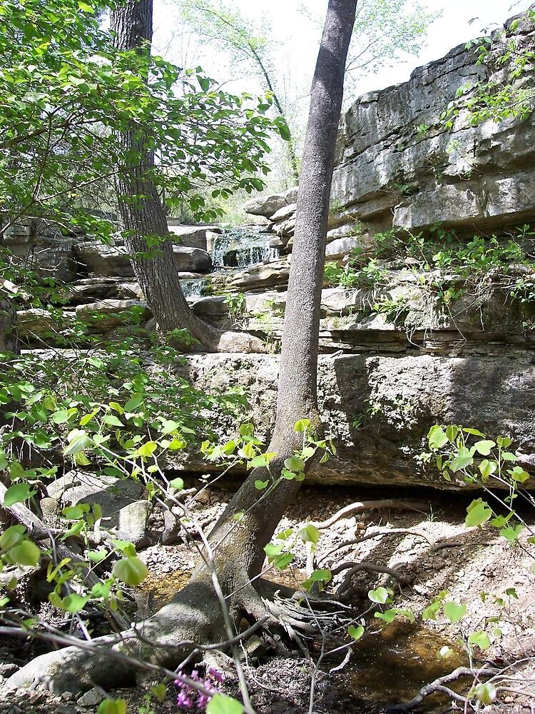 beautiful creeks in Missouri by seemyshots
