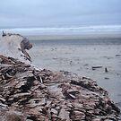 Log on the Beach by heathernicole00