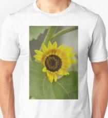Sunflower - macro T-Shirt