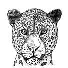 Leopard by miarsmoller