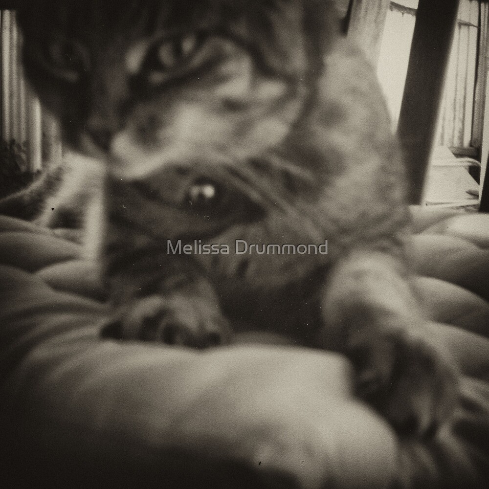 le chat by Melissa Drummond