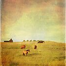 Evening in the Pasture by Laura Palazzolo