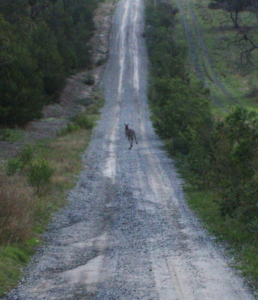 There is a kangaroo in the driveway! by shutter-bug1