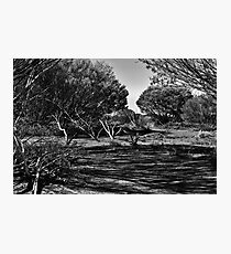 OutBack! Photographic Print