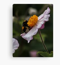 Bee and Cosmos Canvas Print