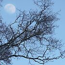 Daytime Moon Rising by Betsy  Seeton