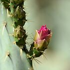 Ready to Open  by Kathleen Brant