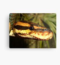 Reptile Royalty Metal Print