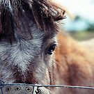 The little horse  by Melissa Drummond