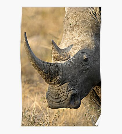 Female Rhino Getting Her Point Across Poster
