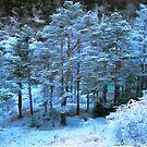 Snowy Landscape by jean-louis bouzou
