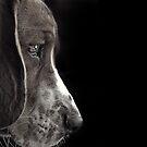 Dog's world by CoffeeBreak