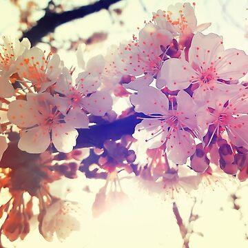 Flor de la fruta de psychoshadow