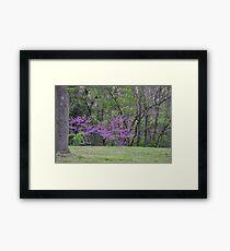 Redbud Tree 4/22/10 Framed Print