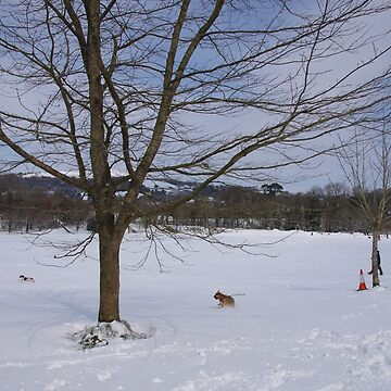 South Brent Recreation Field In Snow by lezvee