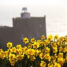 Daffodils at Jacobs Ladder, Sidmouth by Leon Woods