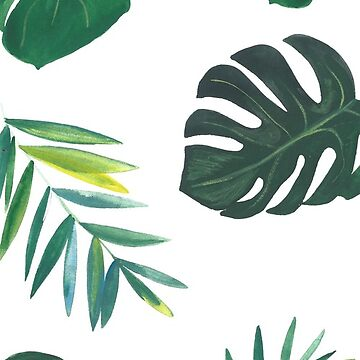 Monstera by artiisan