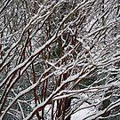 wenn der winter kommt ... von WalnutHill