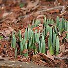... kann der Frühling weit zurückliegen? von WalnutHill