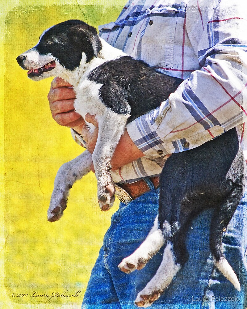 A Dogs Work is Never Done  by Laura Palazzolo