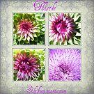 Thistle...Silybum marianum by BShirey