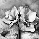 Spanish color splash in bloom black and white by mjvision Mia Niemi by mjvisiondesign
