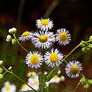 Wild flowers 1 by Earl McCall