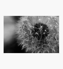 Willow... Photographic Print