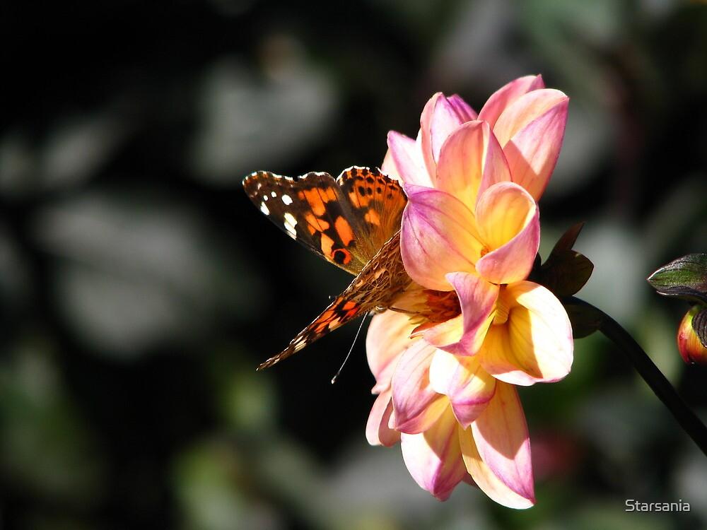 Butterfly Flower by Starsania