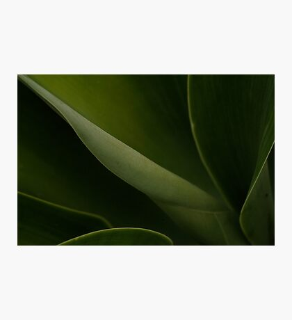 Agave Photographic Print