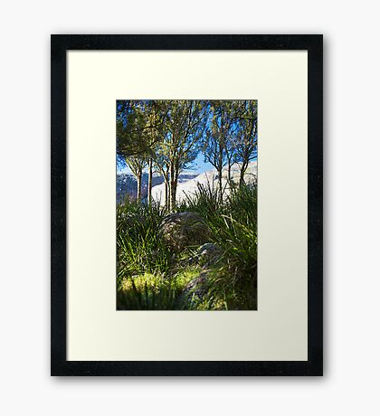 evans crown | native grass | native trees Framed Print