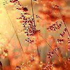 Fairies at sunset. by Beata  Czyzowska Young