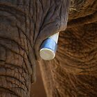 Tusk and Folds by Randy Turnbow