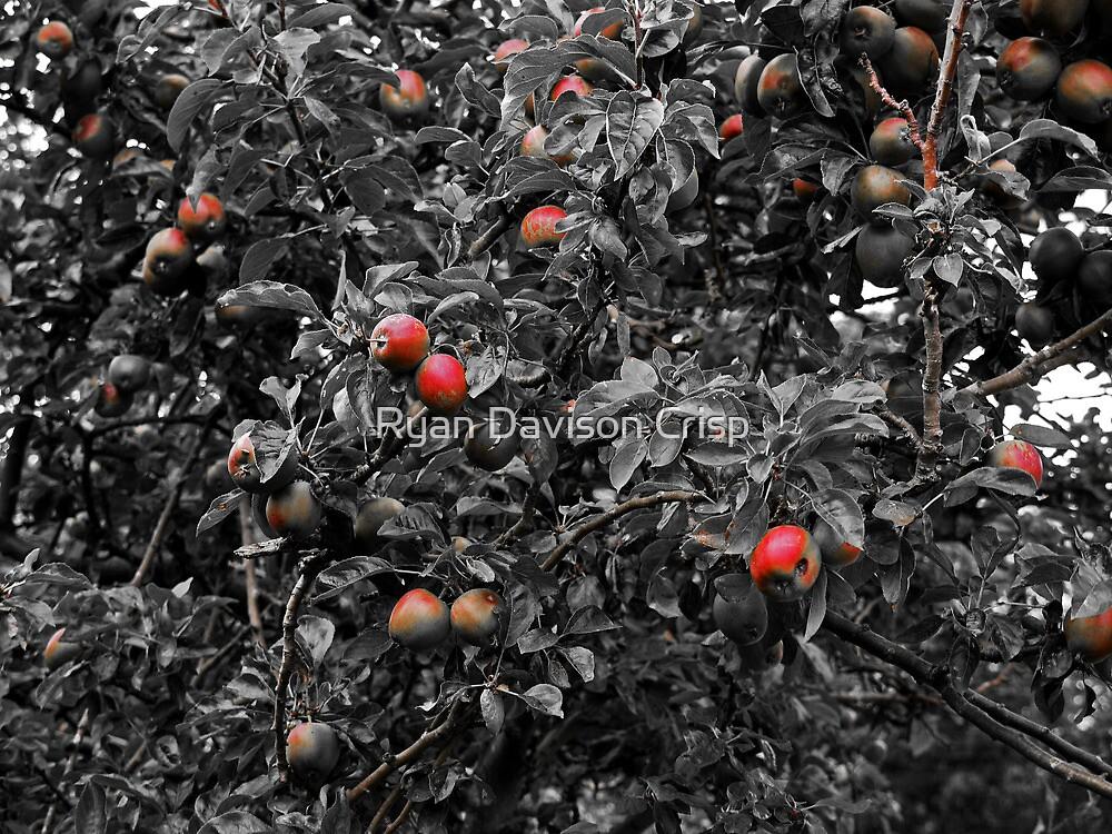 Apple Tree by Ryan Davison Crisp