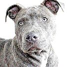 Pit Bull Lover Design - A Portrait of a Blue Nose Pit Bull for all Pitbull Lovers by Angie Stimson