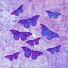 Butterflies Colors O by Vitta