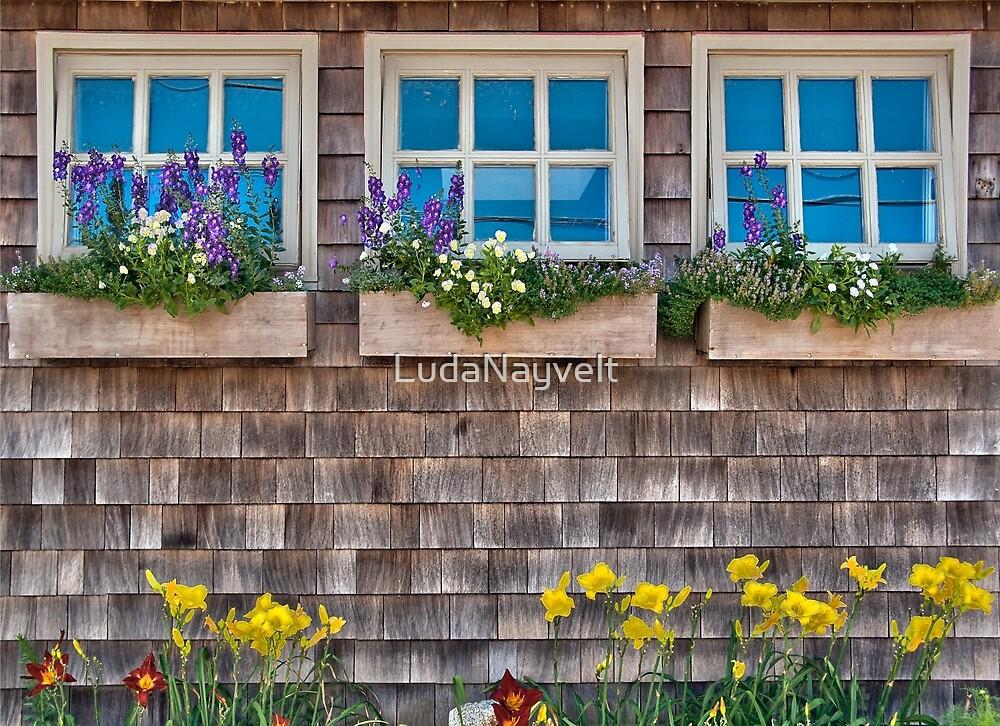 Windows with flowers by LudaNayvelt