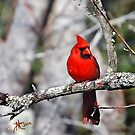Red Red Red by Pat Moore