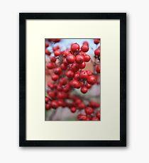 Red Seeds Framed Print