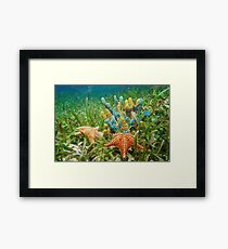 Underwater life with colorful sponges and a starfish Framed Print