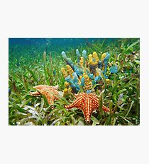 Underwater life with colorful sponges and a starfish Photographic Print