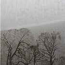 Yorkshire Trees: From Becoming Unbecoming by Una by ThingsbyUna