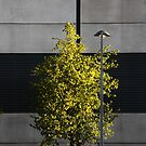 Urban Tree by David Robinson