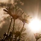 Sun Flowers by Gerry Chaney