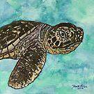 baby sea turtle by derekmccrea